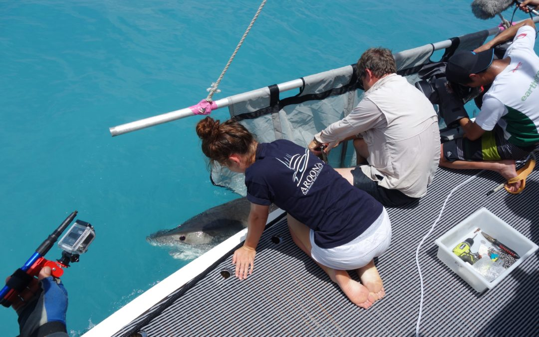 Commercial and work charters Great Barrier Reef