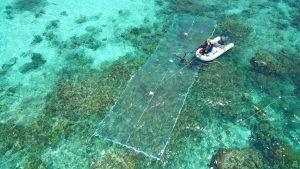 Arranging the settlement sheet over damaged coral.